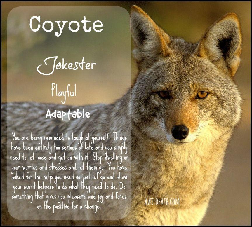jokster-coyote